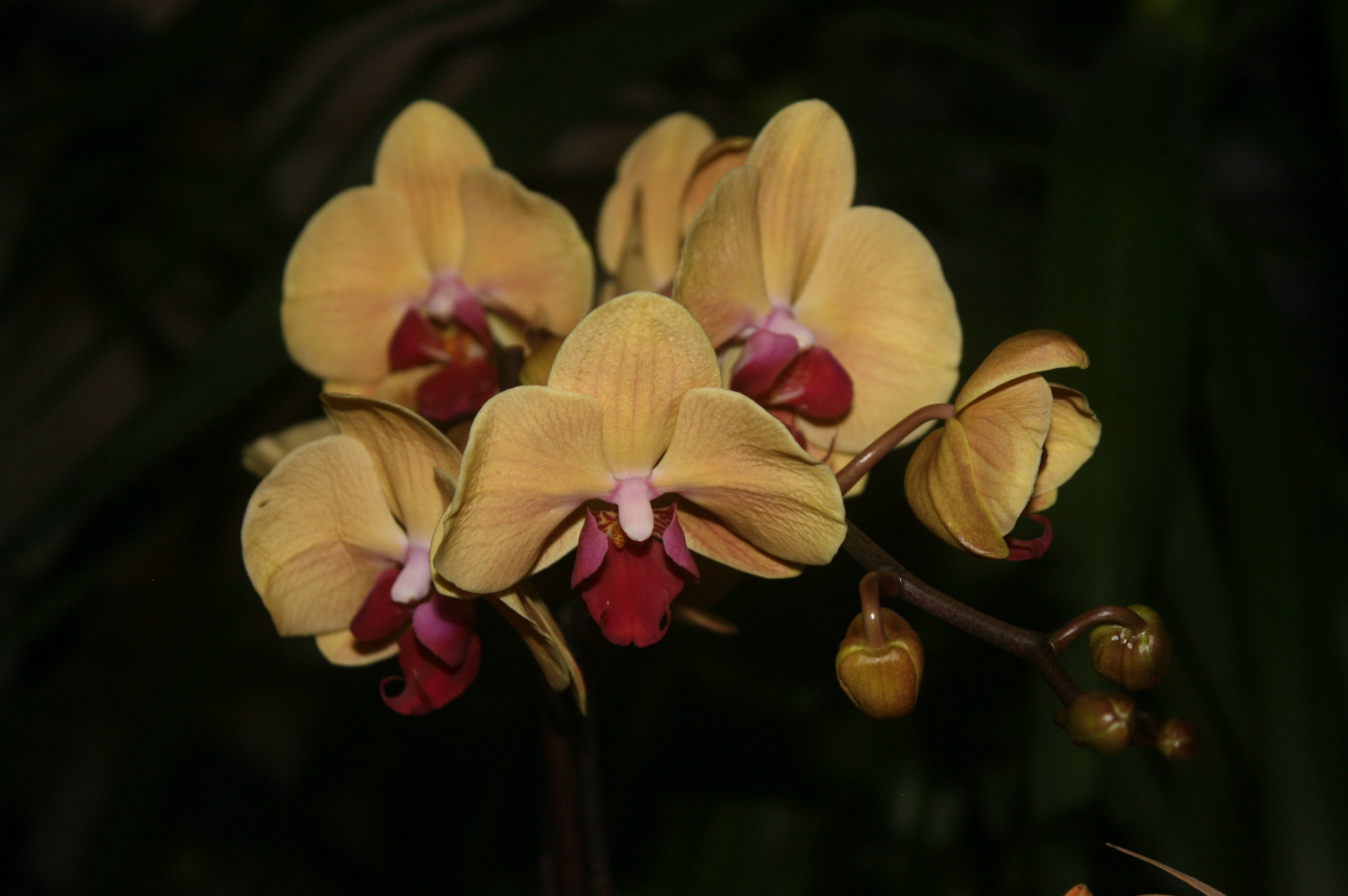 Orchid flower Image