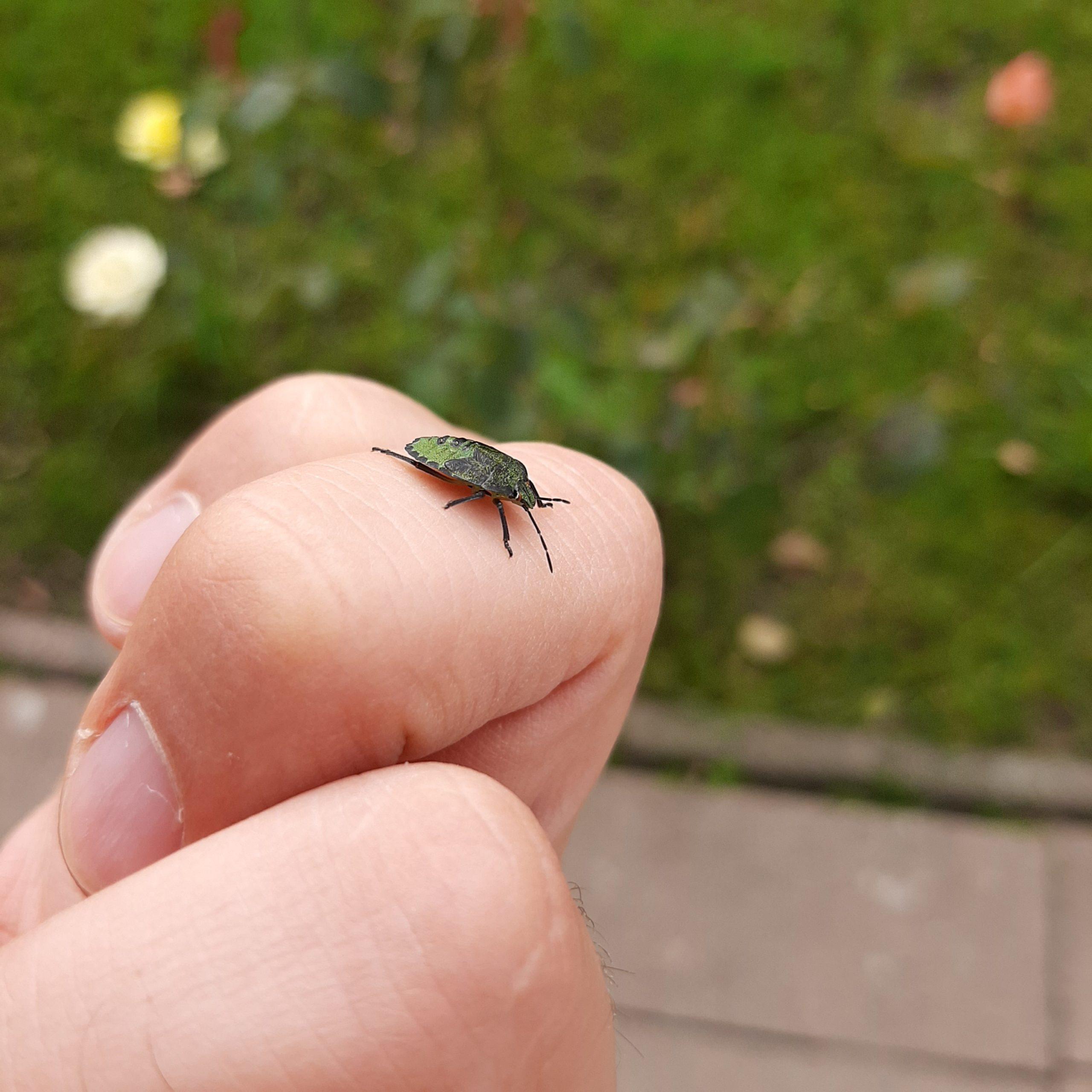 Beetle on hand Image